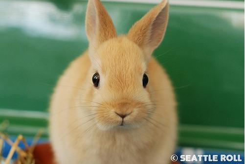 2009, 10-2 Daily Bunny