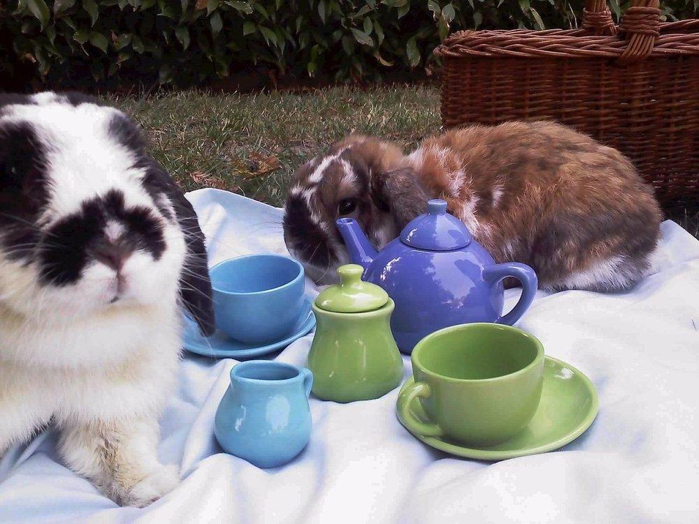 2009, 10-3 Daily Bunny
