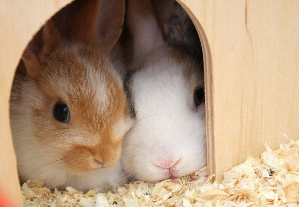 2009, 10-4 Daily Bunny