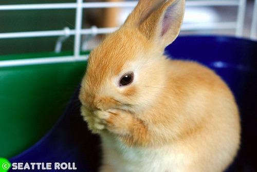 2009, 10-8 Daily Bunny