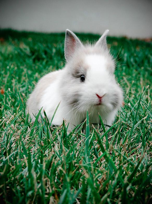 2009, 10-9 Daily Bunny