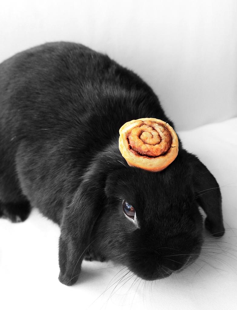 2009, 10-10 Daily Bunny
