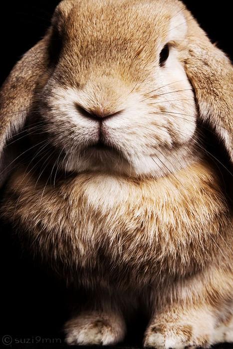 2009, 10-23 Daily Bunny