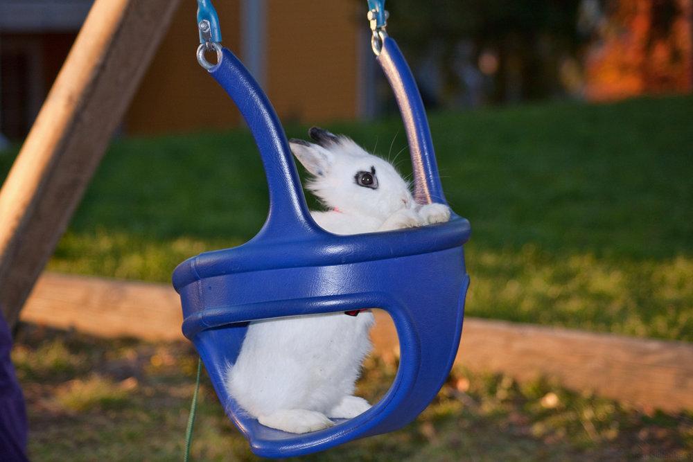 2009, 10-24 Daily Bunny