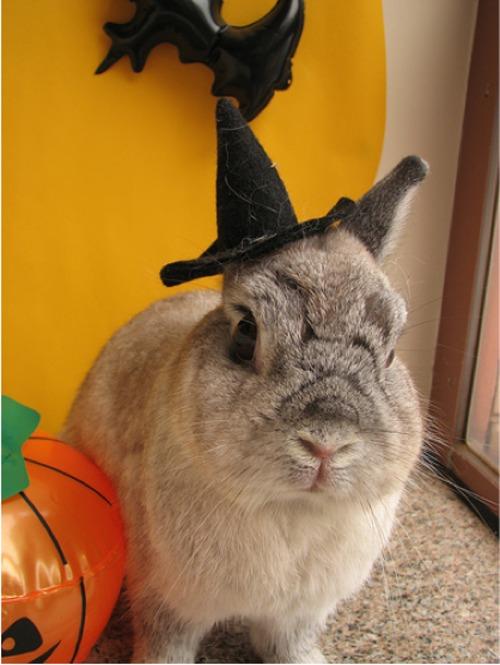 2009, 10-1 Daily Bunny