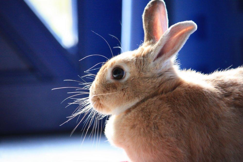 2009, 11-5 Daily Bunny