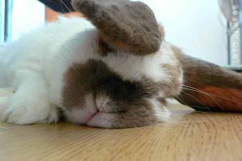 2009, 11-6 Daily Bunny