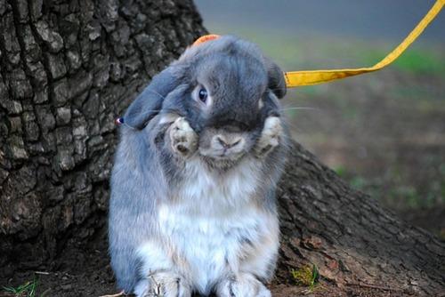 2009, 11-8 Daily Bunny
