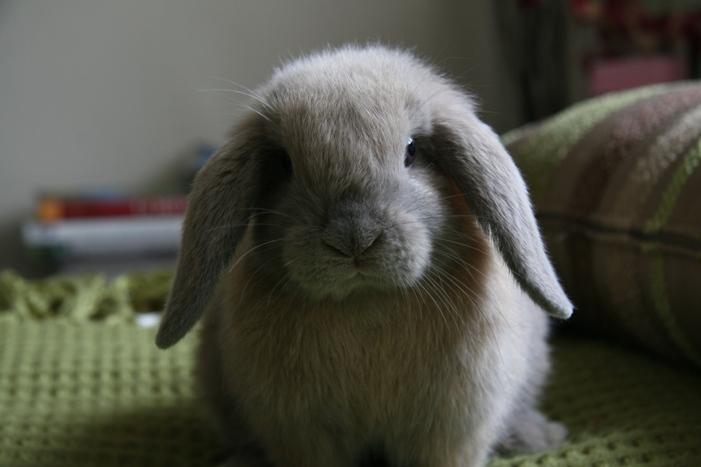 2009, 11-10 Daily Bunny