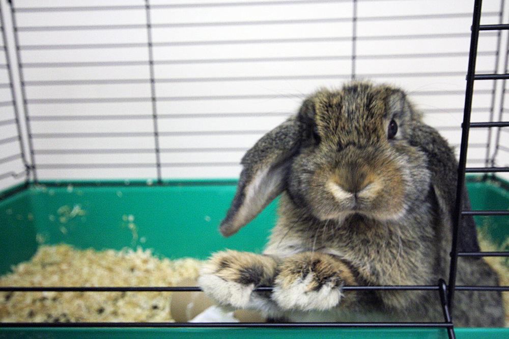 2009, 11-11 Daily Bunny