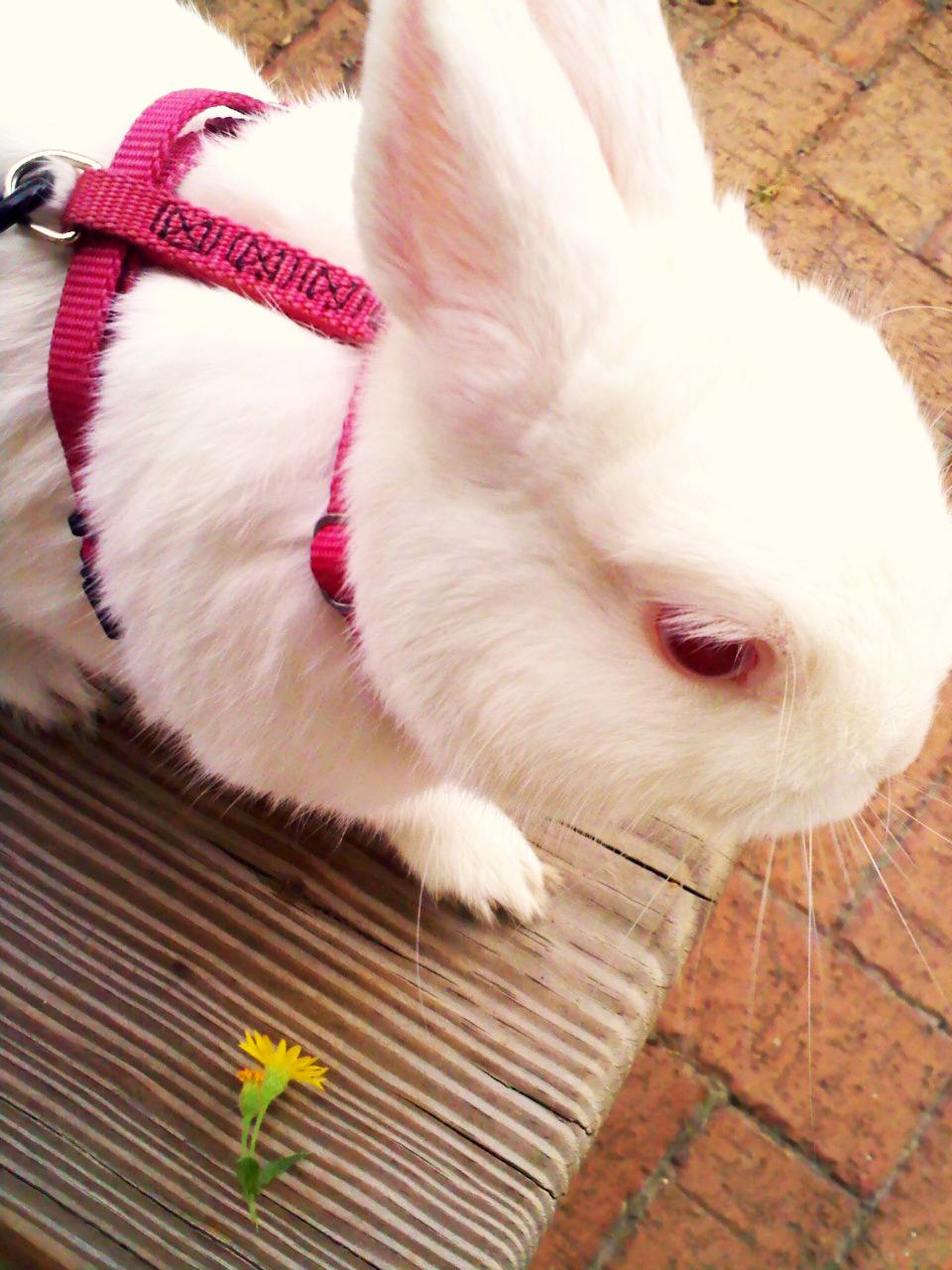 2009, 11-12 Daily Bunny