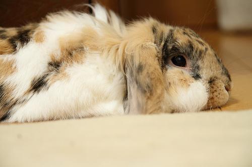 2009, 11-13 Daily Bunny