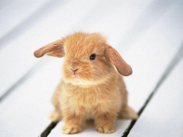 2009, 11-14 Daily Bunny