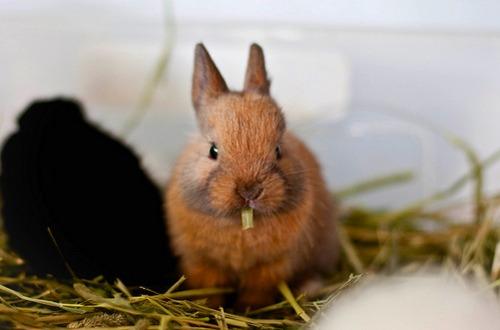 2009, 11-15 Daily Bunny