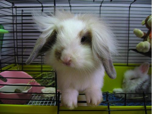 2009, 11-16 Daily Bunny