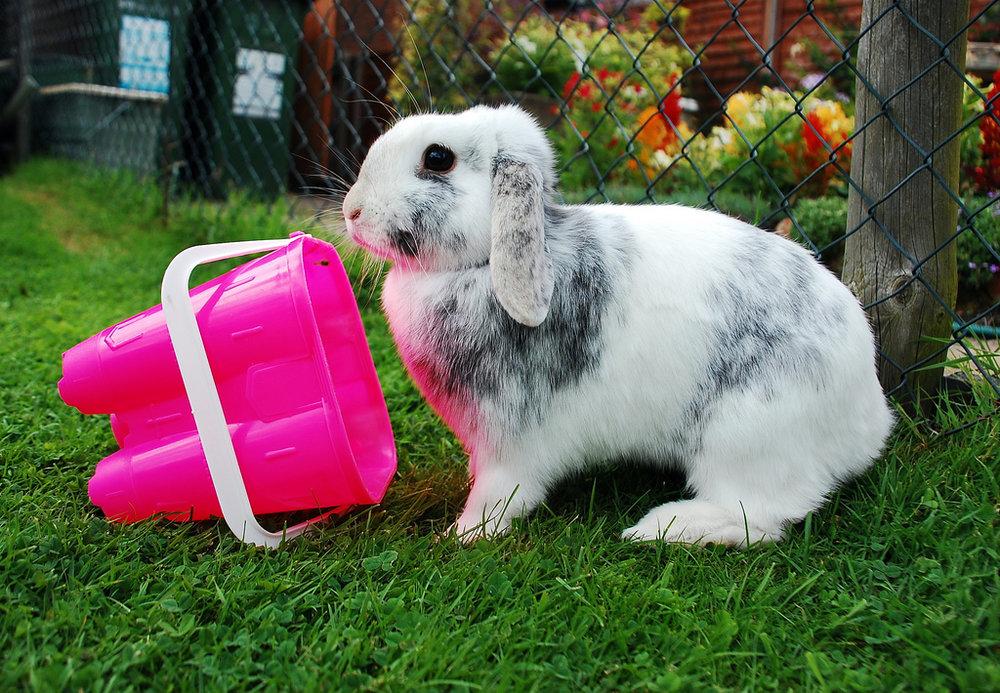 2009, 11-17 Daily Bunny