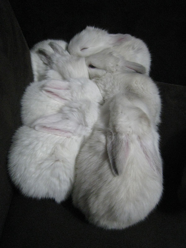 2009, 11-21 Daily Bunny