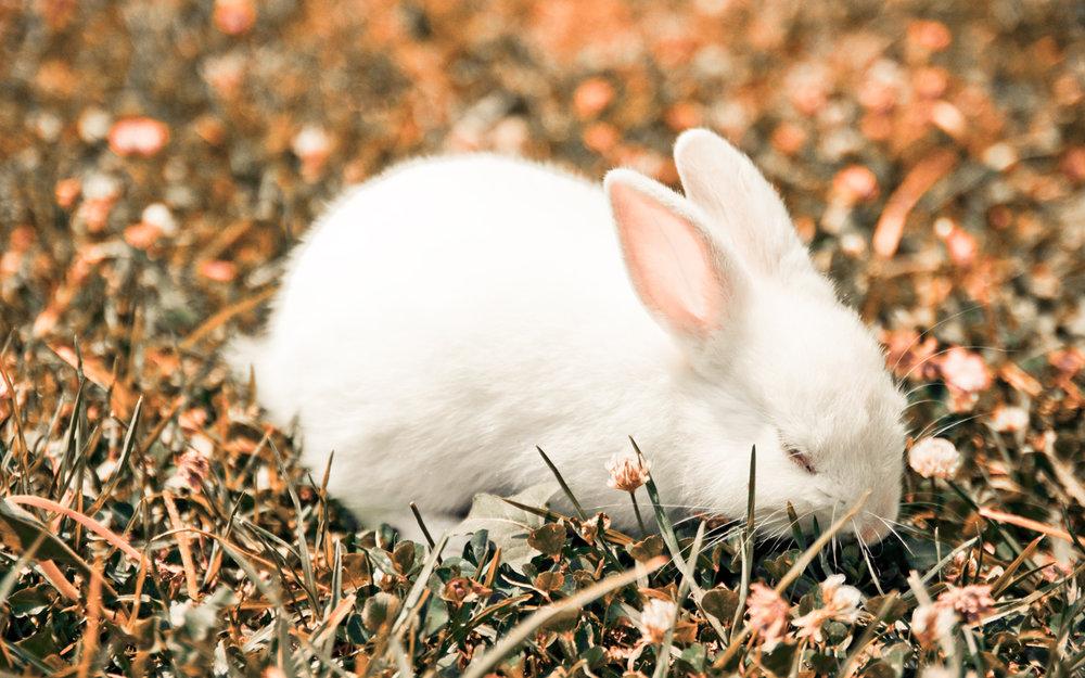 2009, 11-23 Daily Bunny