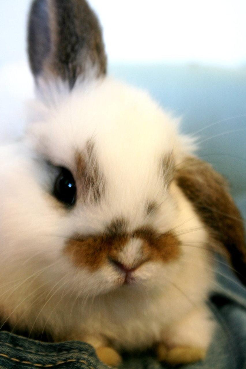 2009, 11-29 Daily Bunny