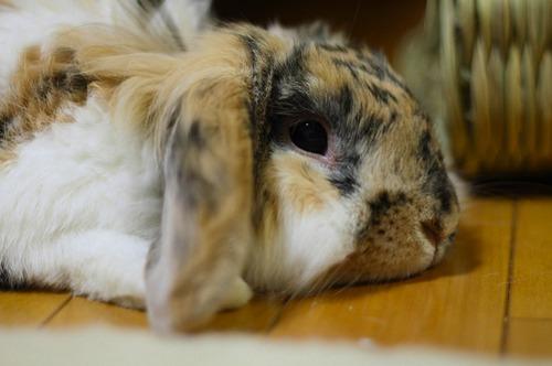 2009, 11-30 Daily Bunny