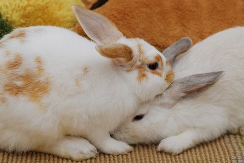 2009, 12-5 Daily Bunny