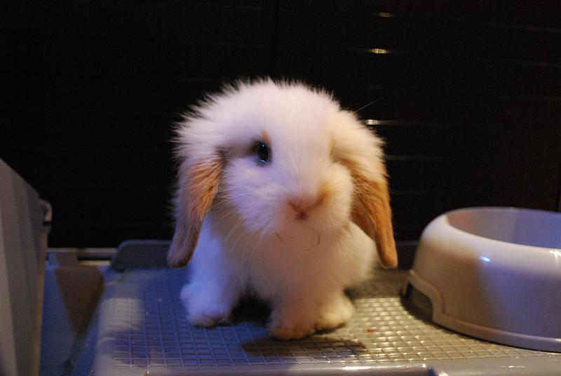 2009, 12-1 Daily Bunny