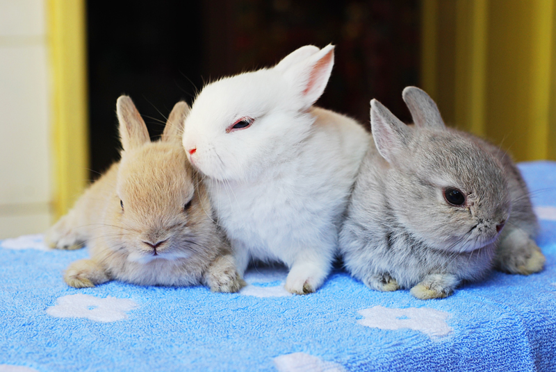 2009, 12-20 Daily Bunny