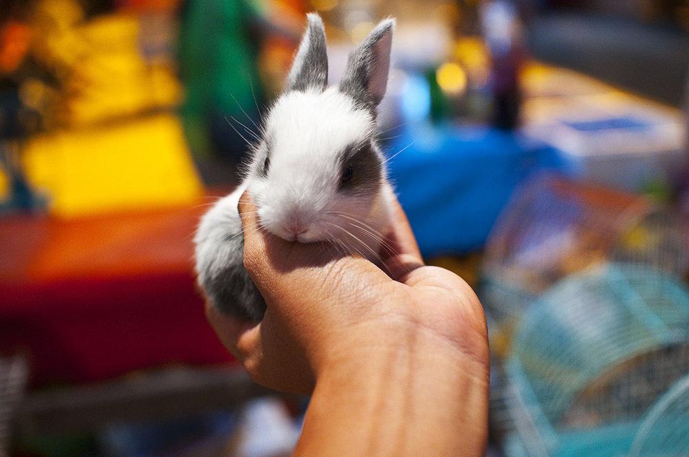 2009, 12-22 Daily Bunny