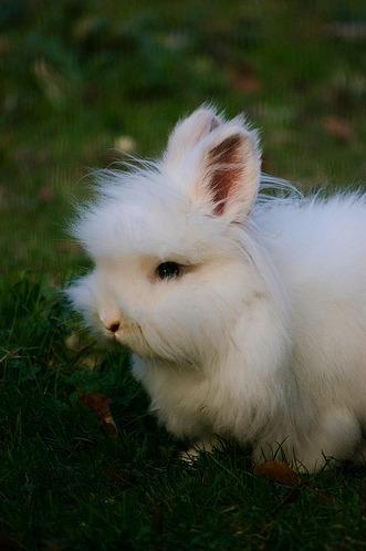 2009, 12-23 Daily Bunny