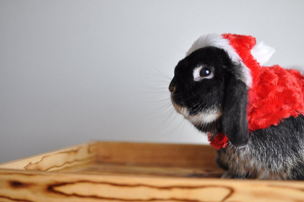 2009, 12-25 Daily Bunny