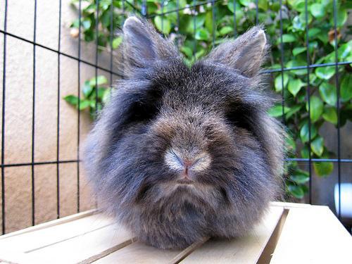 2009, 12-26 Daily Bunny