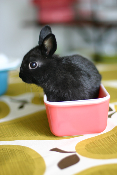 2009, 12-28 Daily Bunny