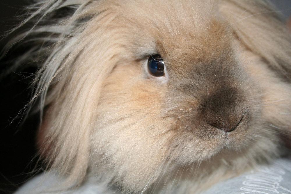 2009, 12-29 Daily Bunny