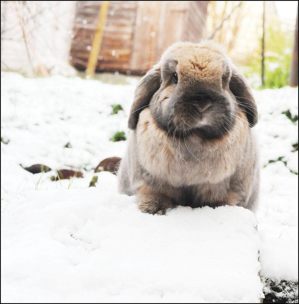 2009, 12-31 Daily Bunny