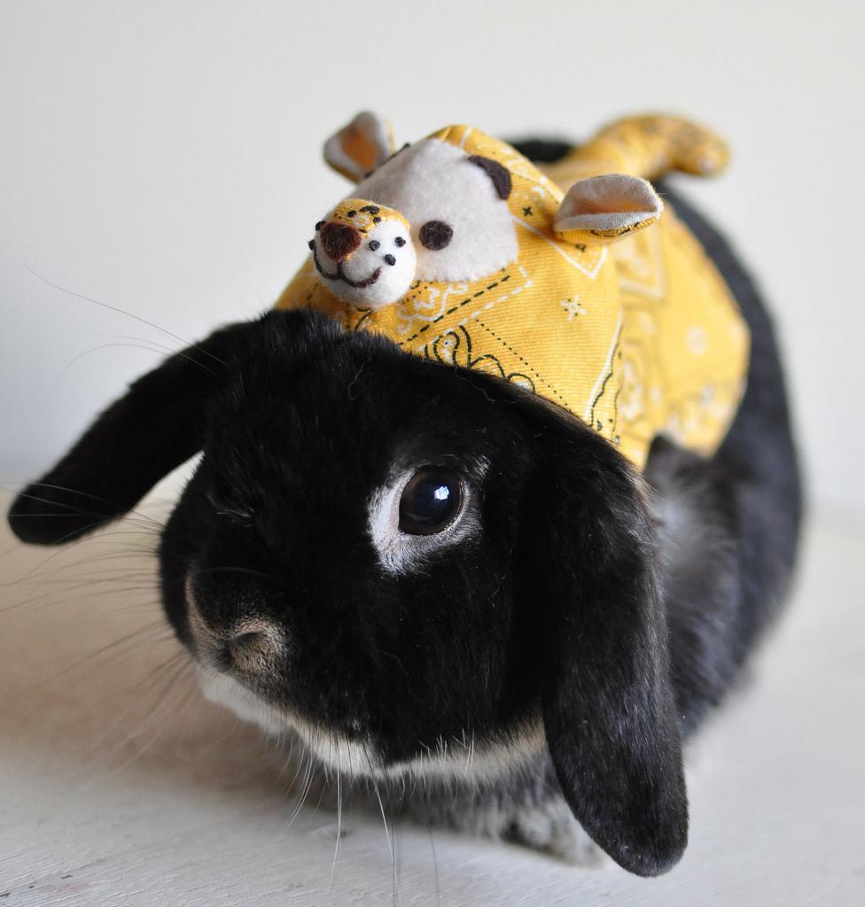 2010, 1-2 Daily Bunny
