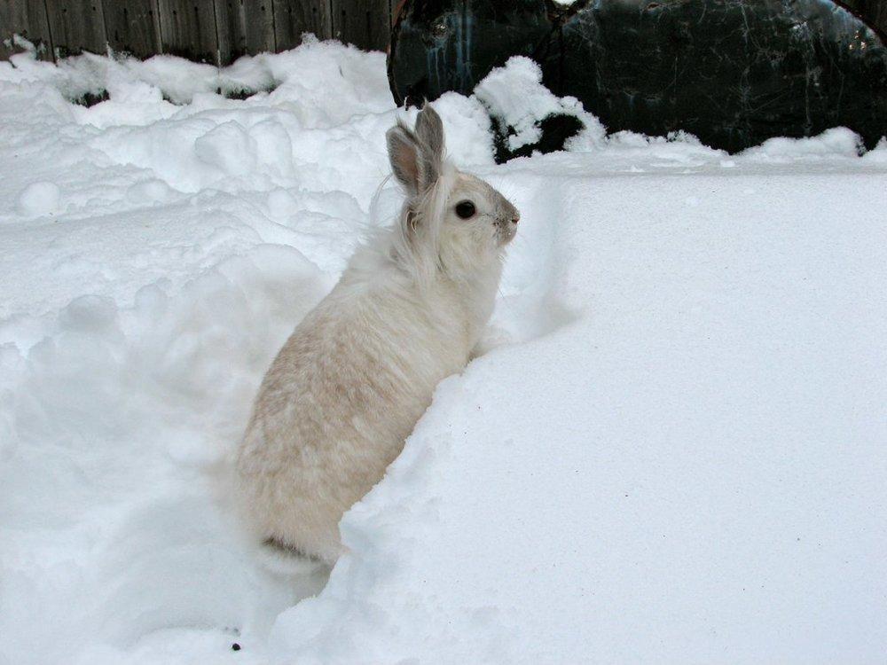 2010, 1-3 Daily Bunny
