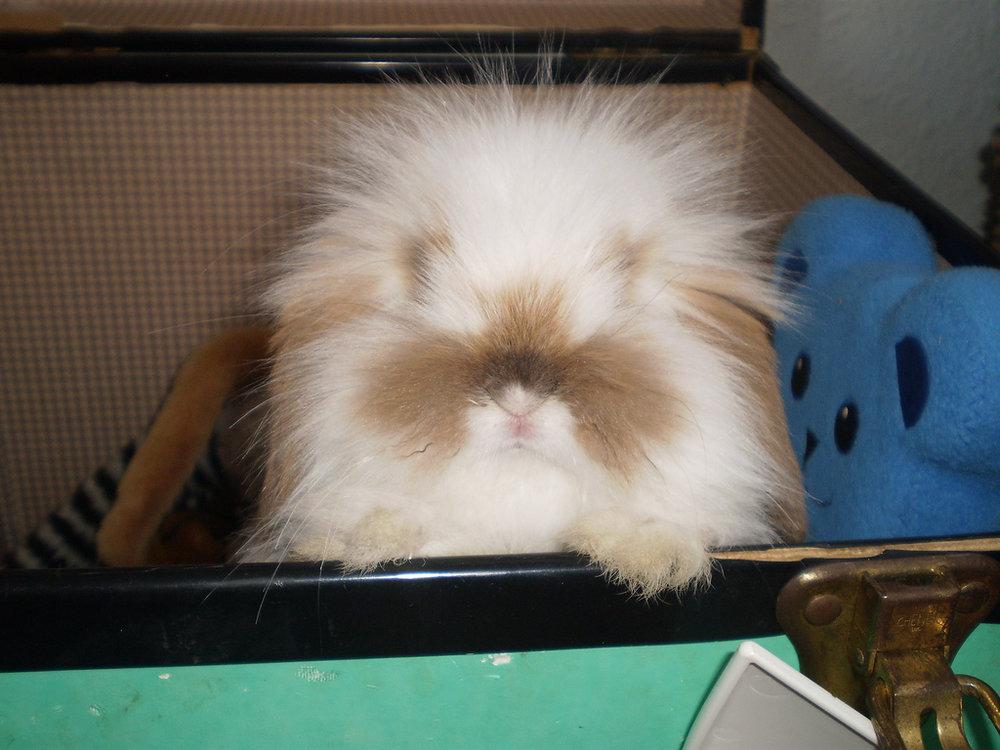 2010, 1-4 Daily Bunny
