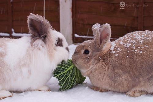 2010, 1-6 Daily Bunny