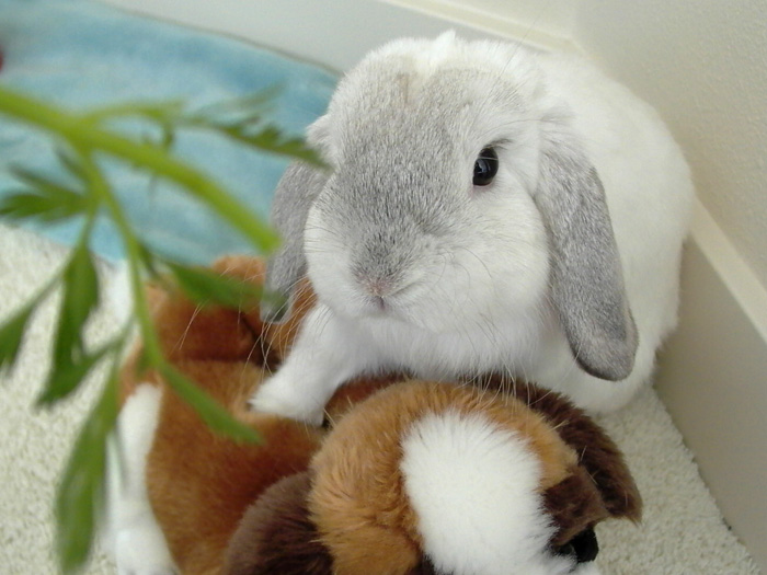 2010, 1-7 Daily Bunny