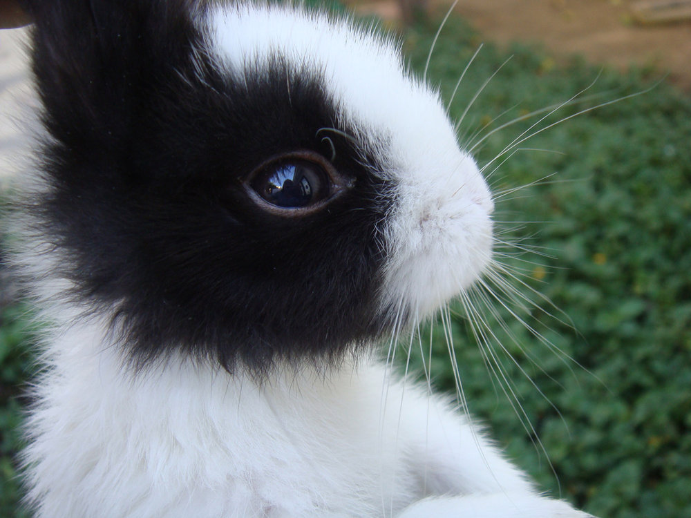 2010, 1-8 Daily Bunny