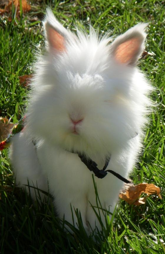 2010, 1-1 Daily Bunny