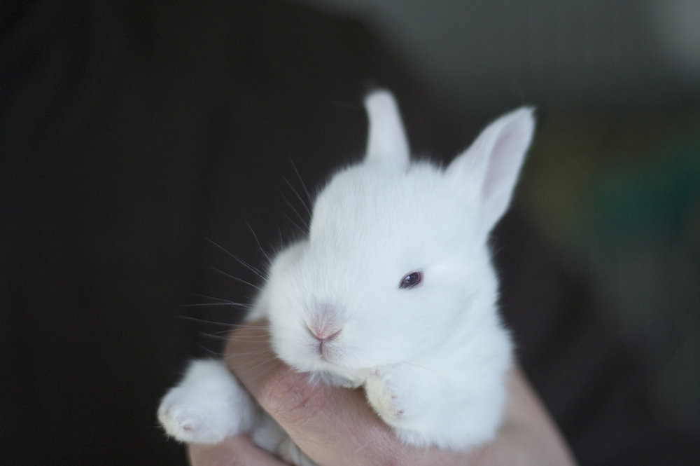 2010, 1-22 Daily Bunny