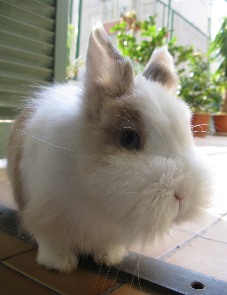 2010, 1-24 Daily Bunny