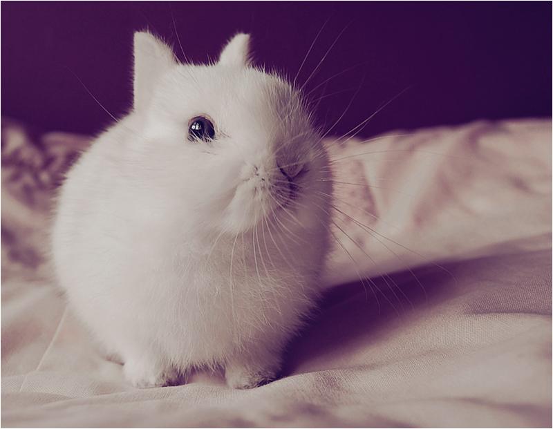 2010, 1-28 Daily Bunny