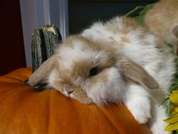 2010, 1-30 Daily Bunny