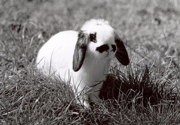 2010, 2-4 Daily Bunny