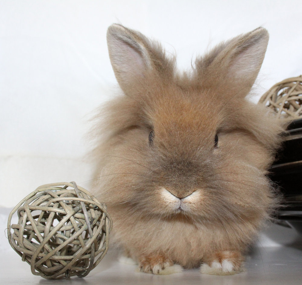 2010, 2-6 Daily Bunny