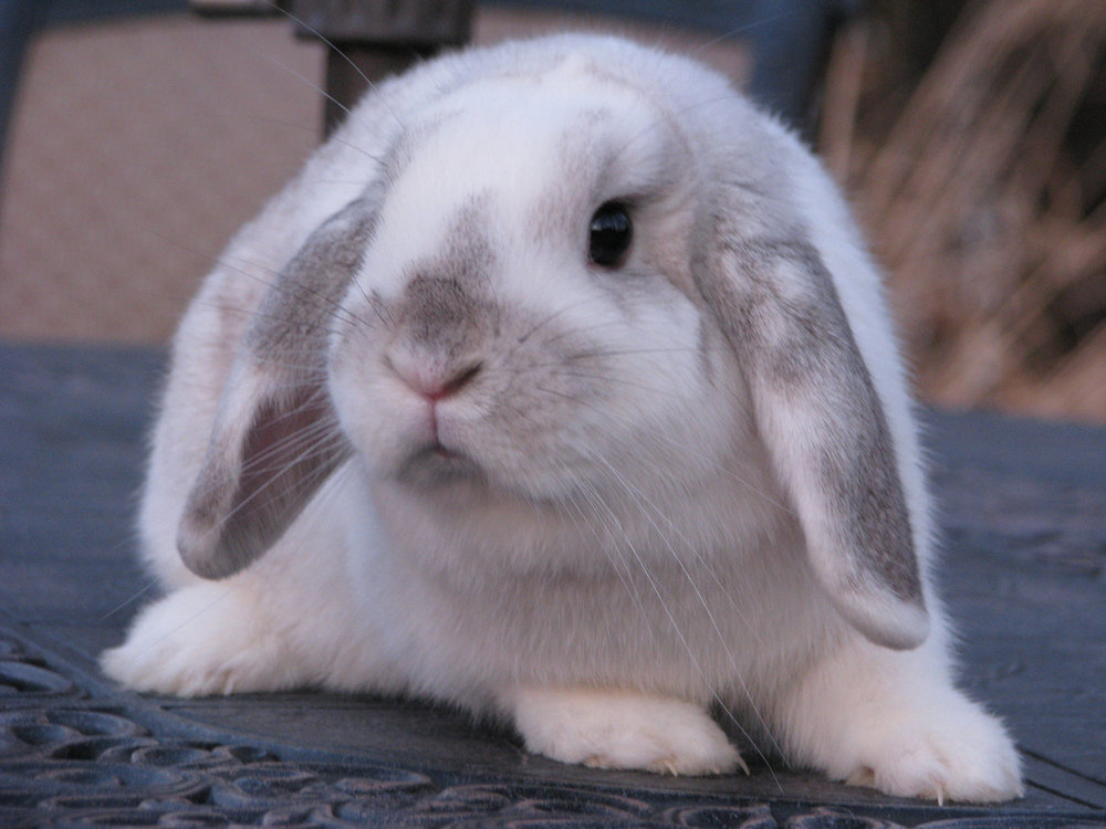 2010, 2-7 Daily Bunny