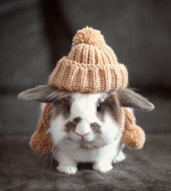 2010, 2-8 Daily Bunny