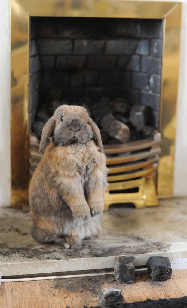 2010, 2-9 Daily Bunny
